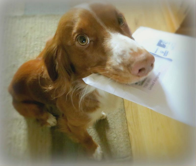 Postman Boo
