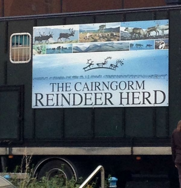 _reindeer8