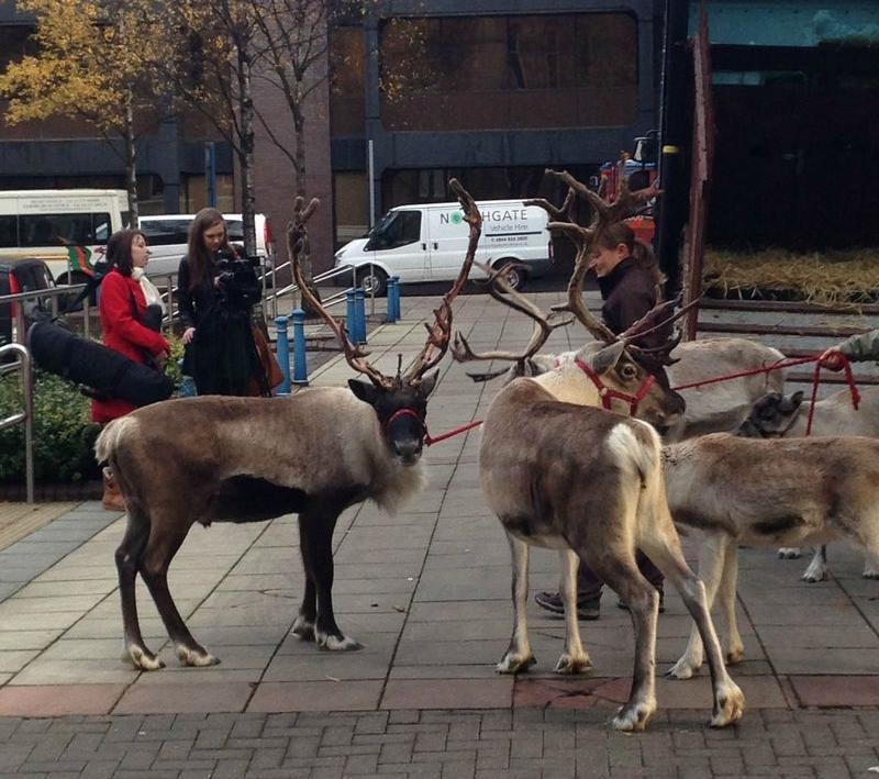_reindeer2.jpg