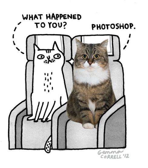 Gemma correll cats