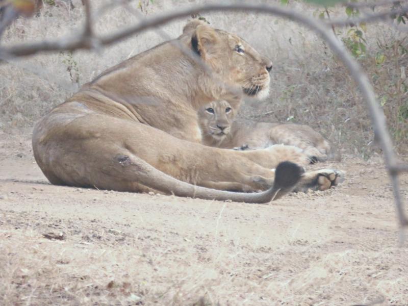 Lions24pg