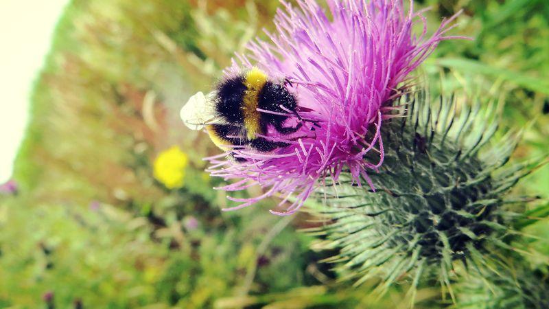 Thistle&bee