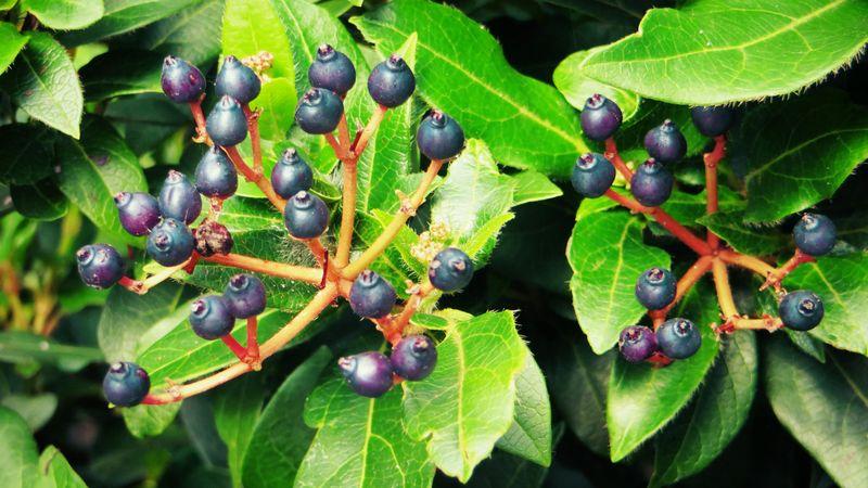 Berries4
