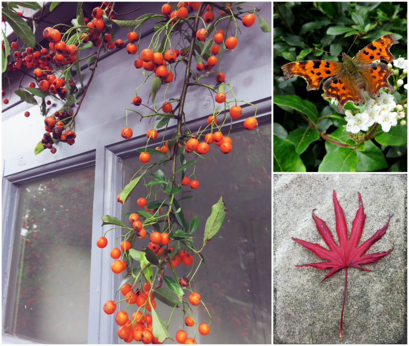 Autumn garden Collage