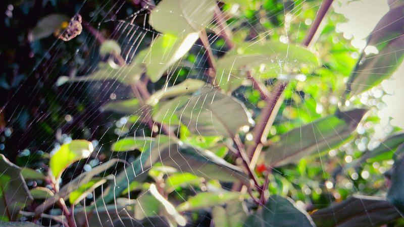 Cobweb2