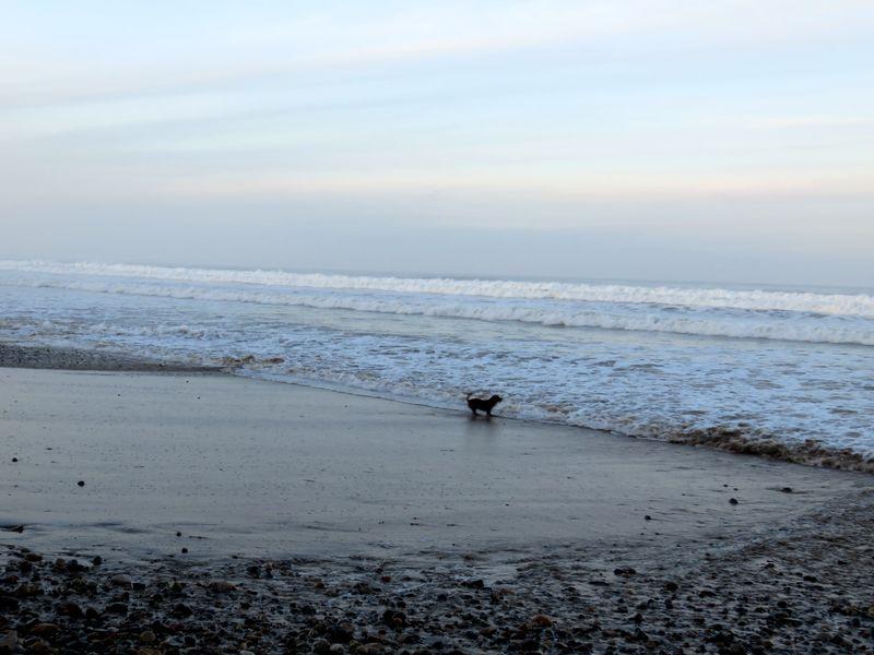 Beachboo